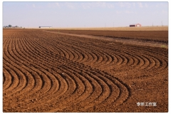 Panhandle-Plains_05_mh1469858066448